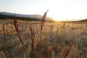 """The Field"" - Cielia"